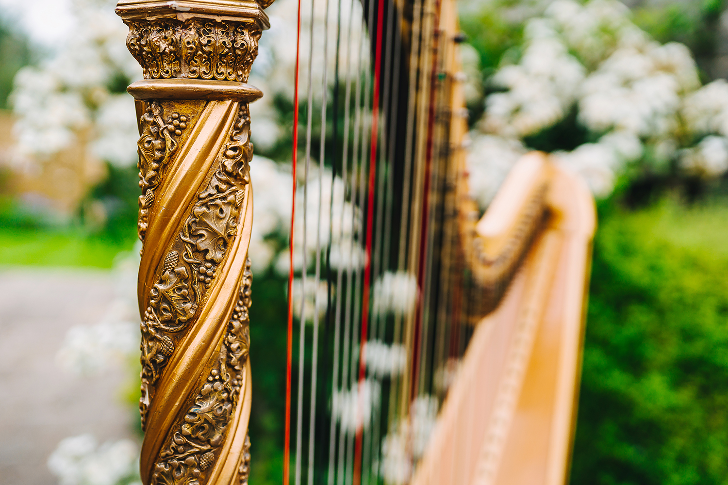 close up image of a harp